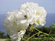 Härliga blommor av den bosatta världen arkivfoton