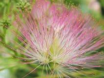 Härliga blommor av den bosatta världen royaltyfri bild