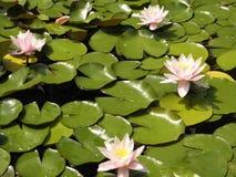 Härliga blommor av den bosatta världen royaltyfria foton