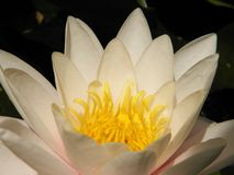 Härliga blommor av den bosatta världen arkivbilder