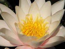 Härliga blommor av den bosatta världen arkivbild
