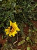 Härliga blommor av Marocko royaltyfria foton