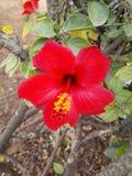 Härliga blommor av morrocodeleverybymen royaltyfri fotografi
