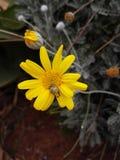 Härliga blommor av morrocodeleverybymen royaltyfri bild