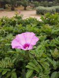 Härliga blommor av morrocodeleverybymen royaltyfria foton