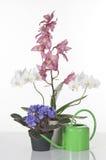 härliga blommor för bakgrund över vita krukar Arkivbild
