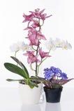 härliga blommor för bakgrund över vita krukar Arkivfoto