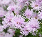 härliga blommor för bakgrund royaltyfria foton