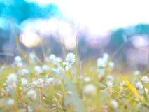 Härliga blommor för löst ängblommagräs i den sparade våren royaltyfri foto