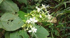 Härliga blommor för nedladdning i Sri Lanka arkivfoton