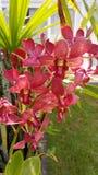 Härliga blommor för orkidé arkivfoto
