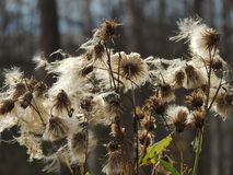 Härliga blommor gör dina ögon ljusa färger Fotografering för Bildbyråer