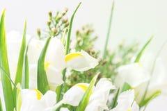 Härliga blommor gör sammandrag bakgrund för bakgrundsvårsommar med blommor fjädrar blommor tonade horisontalpåskferier arkivfoto