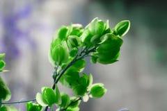 Härliga blommor, grön färg för små blommor Fotografering för Bildbyråer