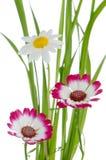 härliga blommor green pink Arkivbild