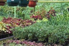 Härliga blommor i botanisk trädgård Royaltyfri Fotografi