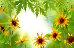 Härliga blommor i den trädgårds- closeupen arkivfoton