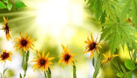 Härliga blommor i den trädgårds- closeupen fotografering för bildbyråer