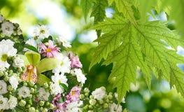 Härliga blommor i den trädgårds- närbilden Arkivfoto