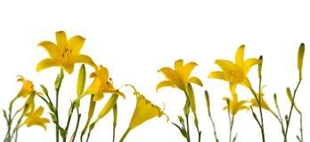 härliga blommor i det trädgårds- slutet p royaltyfri bild