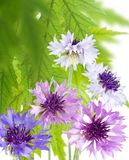 Härliga blommor i det trädgårds- slutet upp Royaltyfri Foto