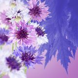 Härliga blommor i det trädgårds- slutet upp Arkivbilder