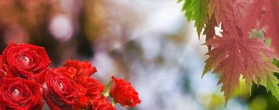 Härliga blommor i det trädgårds- slutet upp Arkivfoto
