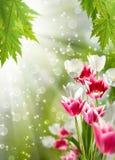 Härliga blommor i det trädgårds- slutet upp royaltyfria foton