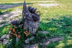 Härliga blommor i ett stupat träd Fotografering för Bildbyråer