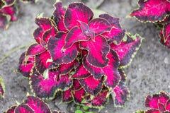 Härliga blommor i fuerstpueckleren parkerar i dålig muskau royaltyfri fotografi