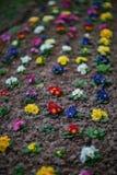 Härliga blommor i olika färger, liten trädgård i staden royaltyfria foton