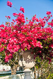 Härliga blommor i parkera av smällen PA-i slott Arkivfoto