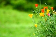 Härliga blommor i trädgården Royaltyfria Bilder