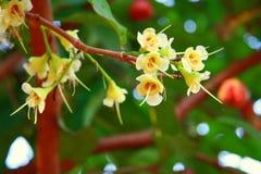 Härliga blommor i trädgården Arkivbild