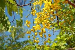 Härliga blommor i trädgården Royaltyfri Bild