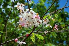 Härliga blommor i trädgården Royaltyfri Foto
