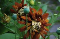 Härliga blommor i trädgården arkivfoton