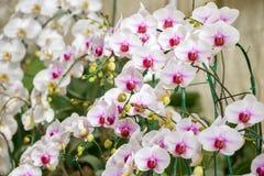 härliga blommor isolerade orchidwhite Royaltyfria Foton