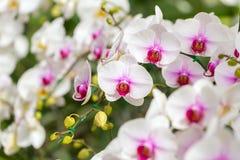 härliga blommor isolerade orchidwhite Arkivbild