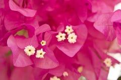 härliga blommor israel Royaltyfria Bilder