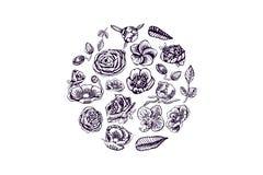 Härliga blommor, knoppar, sidabeståndsdelar i cirkeln, dragen hand vektor illustrationer