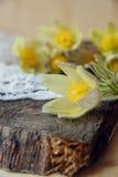 härliga blommor Kvinnors för mars 8 kort för dag Bukettsnödroppar på träbakgrund Royaltyfri Fotografi