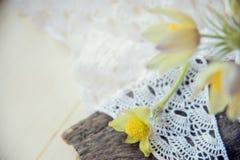 härliga blommor Kvinnors för mars 8 kort för dag Bukettsnödroppar på träbakgrund Royaltyfri Foto