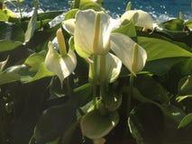Härliga blommor nära vattnet arkivfoton