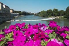 Härliga blommor på bron över Po River i Turin Royaltyfri Foto
