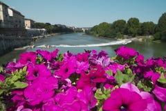 Härliga blommor på bron över Po River i Turin Arkivfoton