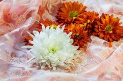 Härliga blommor på en rosa filt fotografering för bildbyråer