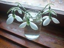 Härliga blommor på fönstret i morgonen Royaltyfri Bild