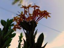 Härliga blommor på staden Arkivfoto