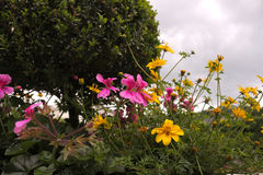 Härliga blommor på träd Fotografering för Bildbyråer